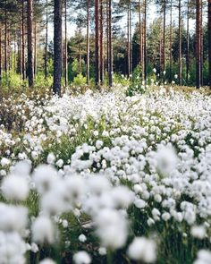 Woodland Flowers, Summer Bucket Lists, Summer Photography, In The Tree, Archipelago, Great Friends, Adventure Is Out There, Summer Vibes, Wild Flowers