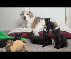 Dog Battles Babby Kittens - ( Not Really ) : Video Clips From The Coolest One