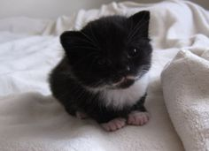 OMG! Look at this delightful kitten with a teeny moustache!