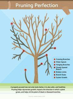 Fruit Trees Backyard Landscaping Ideas For 2019 Bonsai Garden, Garden Trees, Lawn And Garden, Backyard Trees, Bonsai Art, Pruning Fruit Trees, Trees To Plant, Pruning Shrubs, Apple Tree Pruning