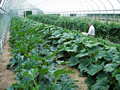Instead of having a profitable small farm, what about a profitable greenhouse?