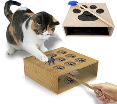 Best Cat Toy Ever? Cat Whack a Mole @Valter Silva you should build this!!