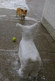 Pembroke Welsh Corgi - Alert and Affectionate Corgi Pictures, Funny Animal Pictures, Dog Photos, Animal Pics, Funny Images, Welsh Corgi Puppies, Pembroke Welsh Corgi, Dachshund Puppies, Chihuahua Dogs