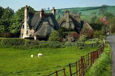 ~ thatched roofs and sheep ~ England looks like a storybook ~ Hmmm. PARTS of England look like a storybook! Cottages England, Devon Cottages, Cozy Cottage, Cottage Homes, Farm Cottage, Cottage Living, Cottage House Designs, Storybook Homes, English Village