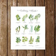 A watercolor guide to culinary herbs.