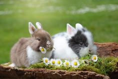 Cute little spring bunnies!