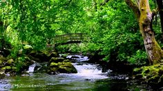 Relax 8 Hours-Relaxing Nature Sounds-Study-Sleep-Meditation-Water Sounds...