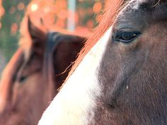 Lightning struck a Georgia horse barn with 14 draft horses inside, including a 3-week-old foal.