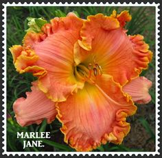 MARLEE JANE
