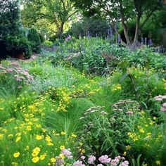 The city doesn't feel like the city when you're in our gardens. In fact, it is looking more like a prairie in the Ripley Gardens these days.