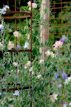 Balcony Plants, Balcony Garden, Outdoor Plants, Garden Plants, Garden Planning, Garden Projects, Beautiful Birds, Gardening Tips, Floral Arrangements