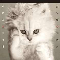 Cute Overload: The Kitteh Covers REVEALED: Album Covers Revisited with Kitten Power