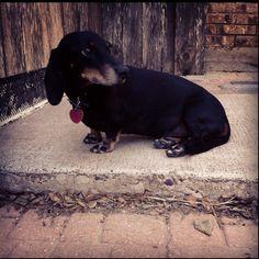 Cute little ol' pup!