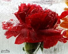 Frozen Flowers Flower Photography, Seed Pods, Christmas Wreaths, Berries, Seeds, Frozen, Holiday Decor, Nature, Flowers