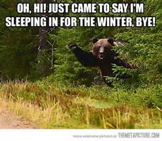 funny quotes about bears - Yahoo Search Results Yahoo Image Search Results