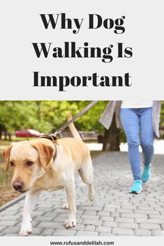 Do you walk your dog