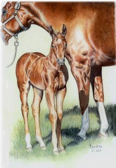 The New Filly Original Colored Pencil by by BrucknerCowboyArt