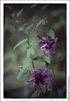 Аквилегия – волшебный цветок эльфов (АВТОРСКАЯ фотокартина ) - цветы,авторская работа