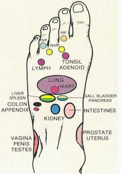 """""""Reflexology meridians connect all the organs and glands in the body and culminate in the feet and hands. By applying pressure with the fingers or a blunt object with approximately 10-15 lbs. of force you may send a surge of energy to the corresponding area. Pressure may be applied for as long or with as much force as is comfortable,"""" stated Dr. Saran."""