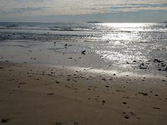 Ventura dog beach December 2012