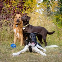 A super session with three photogenic personalities. Tent Photography, Image Photography, Animal Photography, Wildlife Biologist, Pet Photographer, Say Hi, Beautiful Moments, Rocky Mountains, National Geographic