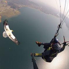 The Parahawking Project in Pokhara, Nepal: A unique combination of paragliding and falconry, this sky-high pursuit allows fliers to soar with raptors