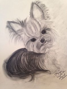 Original Charcoal Drawing  Yorkie  11x14 by TinaWhiteArt on Etsy, $32.00