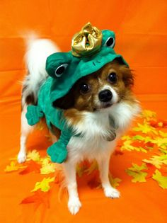 I hope everyone had a safe and happy #Halloween! I know these dogs did- check out more dogs in Halloween costumes!  http://pawsforreaction.com/halloween-dog-costumes.html