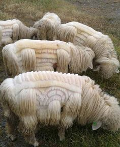 Correctly known as field art. Sheep shearing as art Farm Animals, Animals And Pets, Funny Animals, Cute Animals, Alpacas, Beautiful Creatures, Animals Beautiful, Unusual Animals, Foto Picture