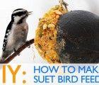 Diy: How To Make Suet Winter Bird Feeders