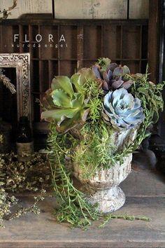 フローラのガーデニング・園芸作業日記-多肉植物 寄せ植え エケベリア 三日月ネックレス
