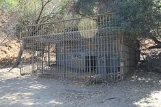 A just-under four mile loop through a seldom-used section of Griffith Park. This hike will take you up to the fenced promontory of Bee Rock for tremendous views of Glendale and the San Gabriels, then back down through the ruins of the old Los Angeles Zoo before ending up at an historic carousel. From 1912 …