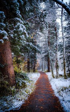 Winter path (June Lake, California) by Cat Connor on 500px