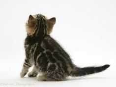 Whiskers On Kittens, Kitty, Animals, Image, Cat Breeds, Little Kitty, Animales, Animaux, Kitty Cats