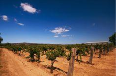 Swan Valley / Western Australia.  Wine yards Swan Valley by Elliott Keene