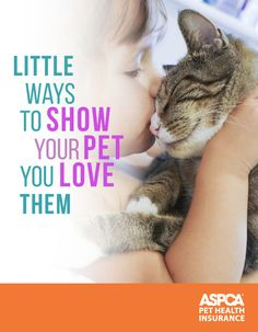 Little Ways to Show Your Pet You Love Them