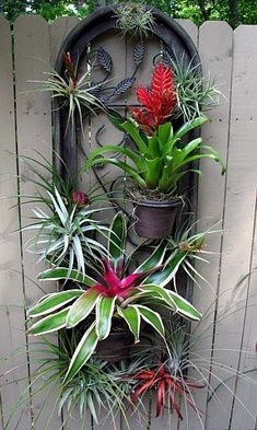 Outdoor air plant and bromeliad display