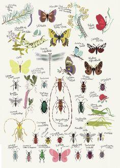 Insekten Plakat - Auf Französisch.  Tolle Illustrator, der auch für Djeco arebeitet