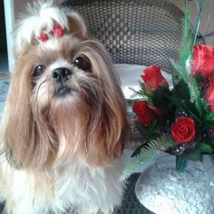Cachorros fofos | Fareja Pet