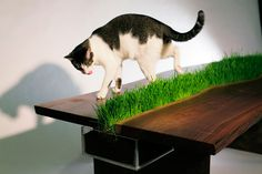 Grass Table for Cats #Cute