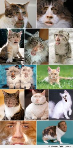 27 Ideas For Funny Face Swaps Nicolas Cage Nicolas Cage, Crazy Cat Lady, Crazy Cats, Really Funny, The Funny, Crazy Funny, Nicholas Cage Face, Funny Face Swap, Face Swaps