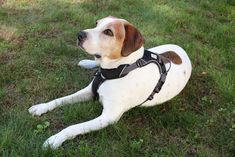Dog Harness by My Busy Dog  No Pull Easy On/Off Front and Back Leash Attachments Handle Metal Strap Adjuster to Keep Fit  Perfect for Small and Large Dogs Size Chart in Pictures Medium Black *** Check out this great product.-It is an affiliate link to Amazon. #PetHarnessesLeashes
