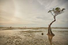 Tiny mangroves at Walakiri beach on Sumba island Indonesia. Reflection, Road Trip, Trees, Journey, Island, Beach, Animals, Animales, Animaux
