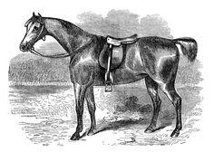 vintage horse clipart, black and white clip art, covert hack image, farm animal graphics, vintage animal printable