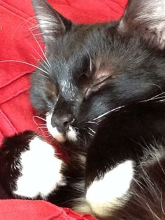 kitty sleeping :)))