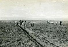 4460 | Noordoostpolder. Het graven van greppels. 1943 Bron: … | Flickr