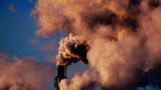 Guernica - climate fiction