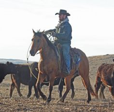Horses for Sale Majestic Horse, Beautiful Horses, Cattle For Sale, Cowboys And Angels, Ranches For Sale, American Quarter Horse, Country Lifestyle, Bull Riding, Ranch Life