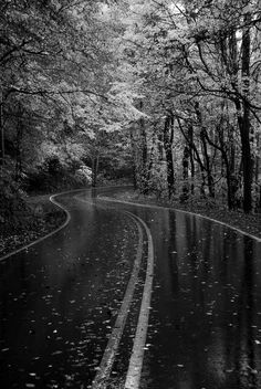 of Outstanding Photos from Master Photographers Autumn Rain. My goodness! Can this scenery get anymore beautiful? My goodness! Can this scenery get anymore beautiful? Beautiful World, Beautiful Places, Beautiful Roads, Beautiful Scenery, Wonderful Places, Beautiful Forest, Stunningly Beautiful, Absolutely Stunning, Beautiful Landscapes