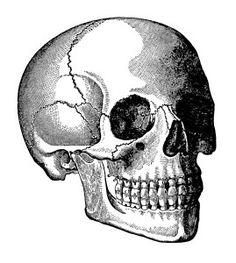 skull clip art, human head skull, vintage printable, black and white graphics…
